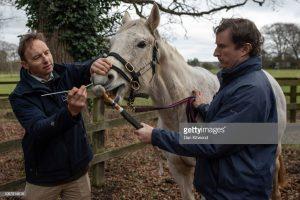 Horse Swabbed For Equine Flu